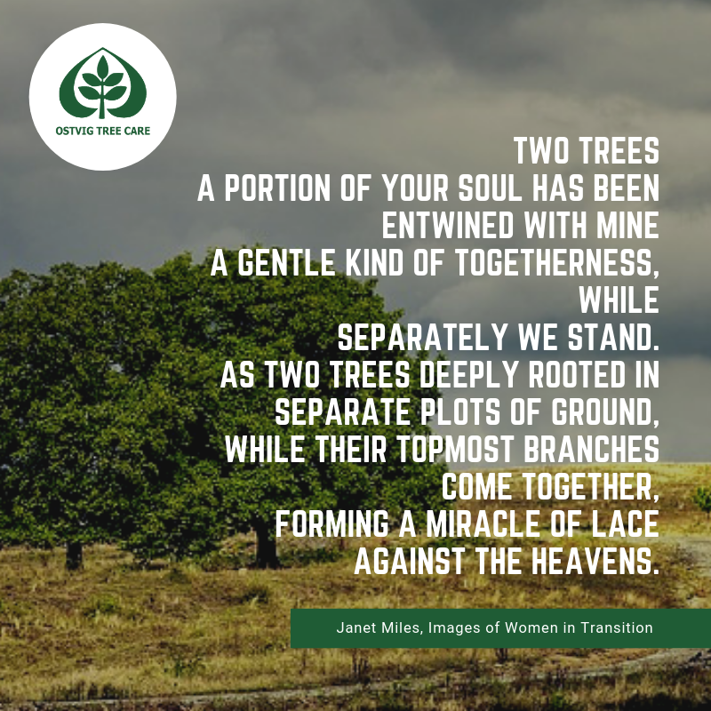"""Two trees a portion of your soul has been entwined with mine a gentle kind of togetherness, while separately we stand. as two trees deeply rooted in separate plots of ground, while their topmost branches come together, forming a miracle of lace against the heavens."""