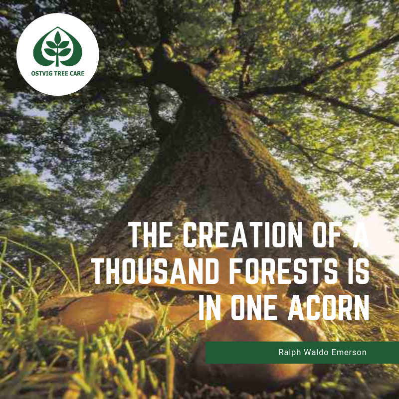 THE CREATION OF A THOUSAND FORESTS IS IN ONE ACORN