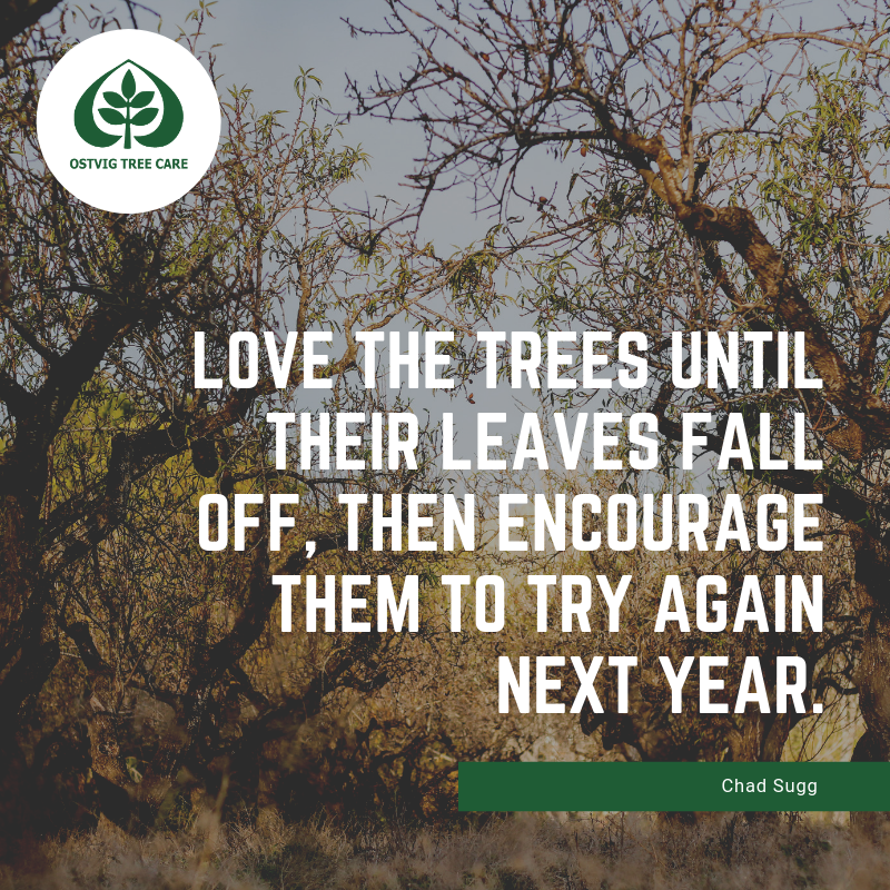 Love the trees until their leaves fall off, then encourage them to try again next year.