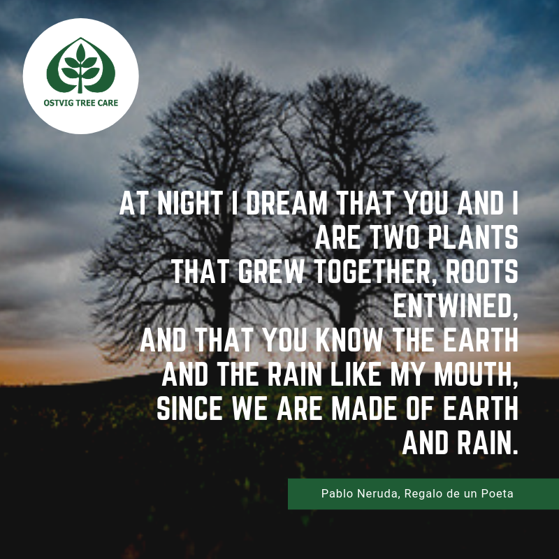 """At night i dream that you and i are two plants that grew together, roots entwined, and that you know the earth and the rain like my mouth, since we are made of earth and rain."""