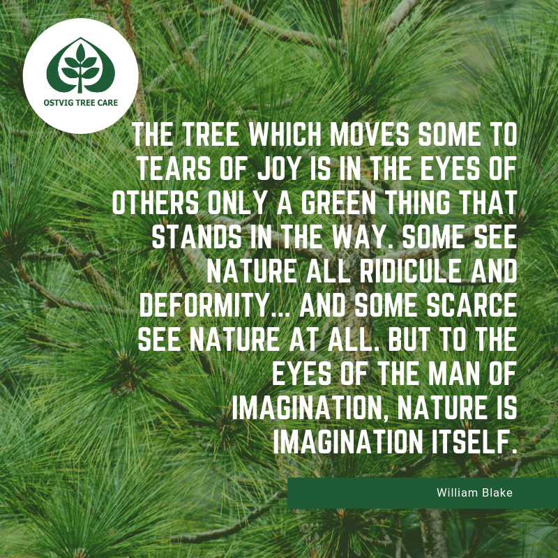 The tree which moves some to tears of joy is in the eyes of others only a green thing that stands in the way. some see nature all ridicule and deformity... and some scarce see nature at all. but to the eyes of the man of imagination, nature is imagination itself.