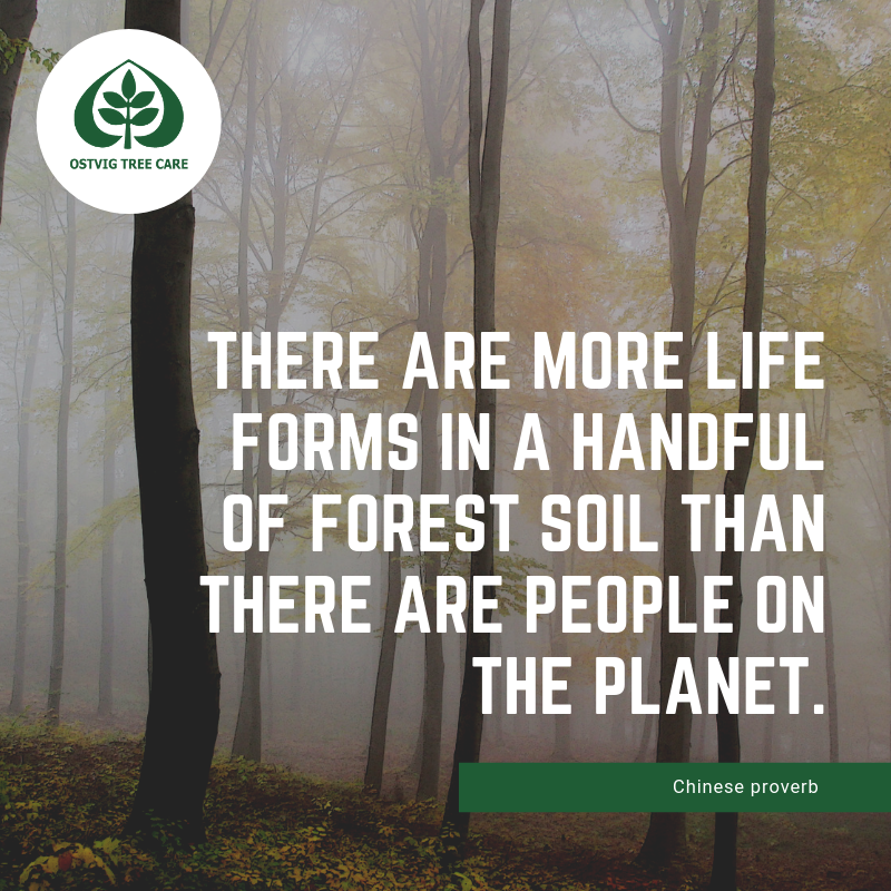 There are more life forms in a handful of forest soil than there are people on the planet.