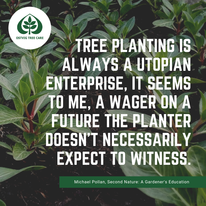Tree planting is always a utopian enterprise, it seems to me, a wager on a future the planter doesn't necessarily expect to witness.