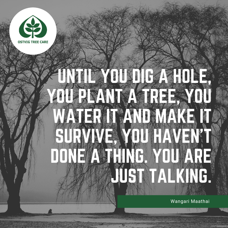 Until you dig a hole, you plant a tree, you water it and make it survive, you haven't done a thing. you are just talking.