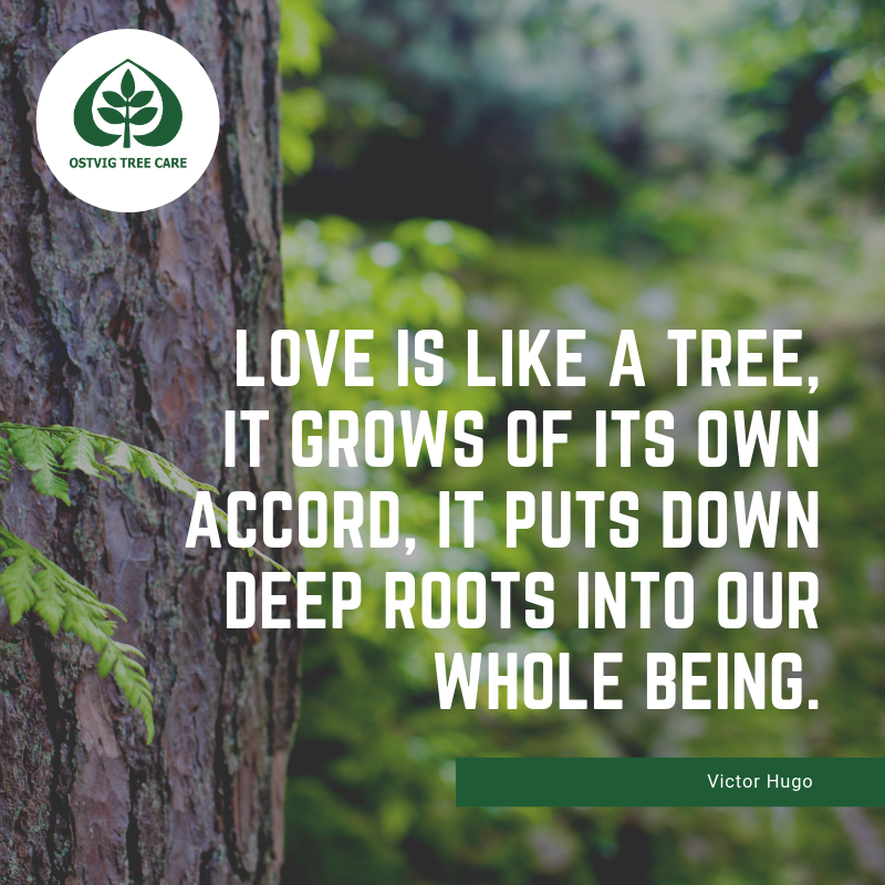 Love is like a tree, it grows of its own accord, it puts down deep roots into our whole being.
