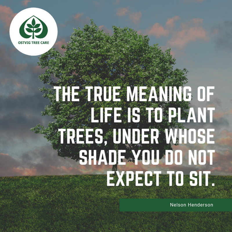 The true meaning of life is to plant trees, under whose shade you do not expect to sit.