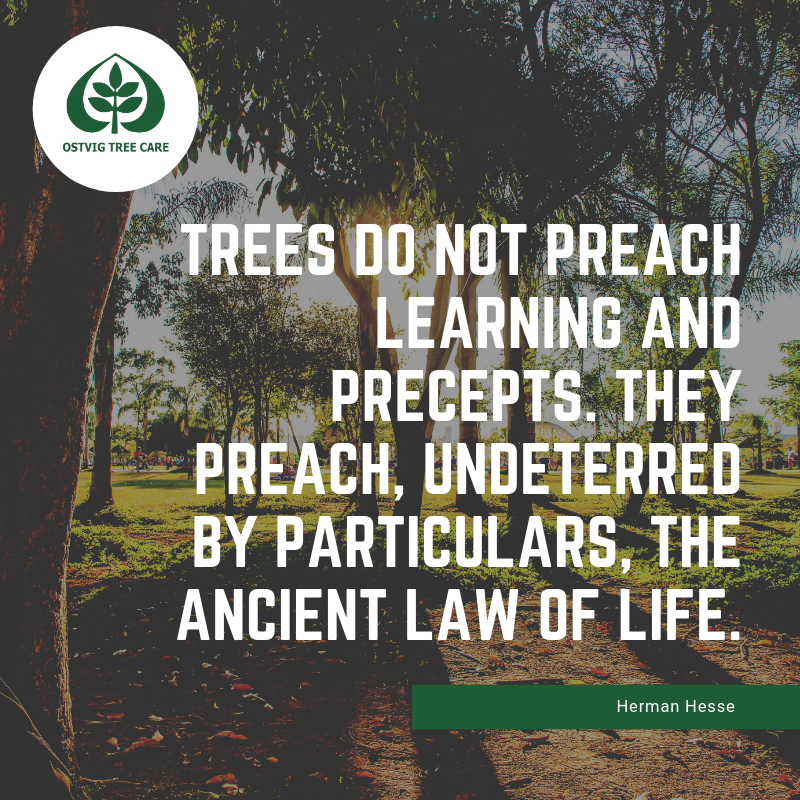 Trees do not preach learning and precepts. they preach, undeterred by particulars, the ancient law of life.