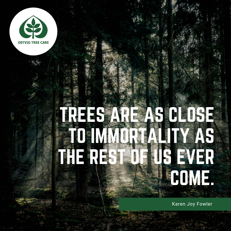 Trees are as close to immortality as the rest of us ever come.