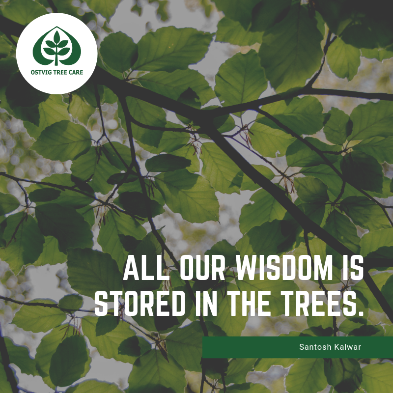 All our wisdom is stored in the trees.