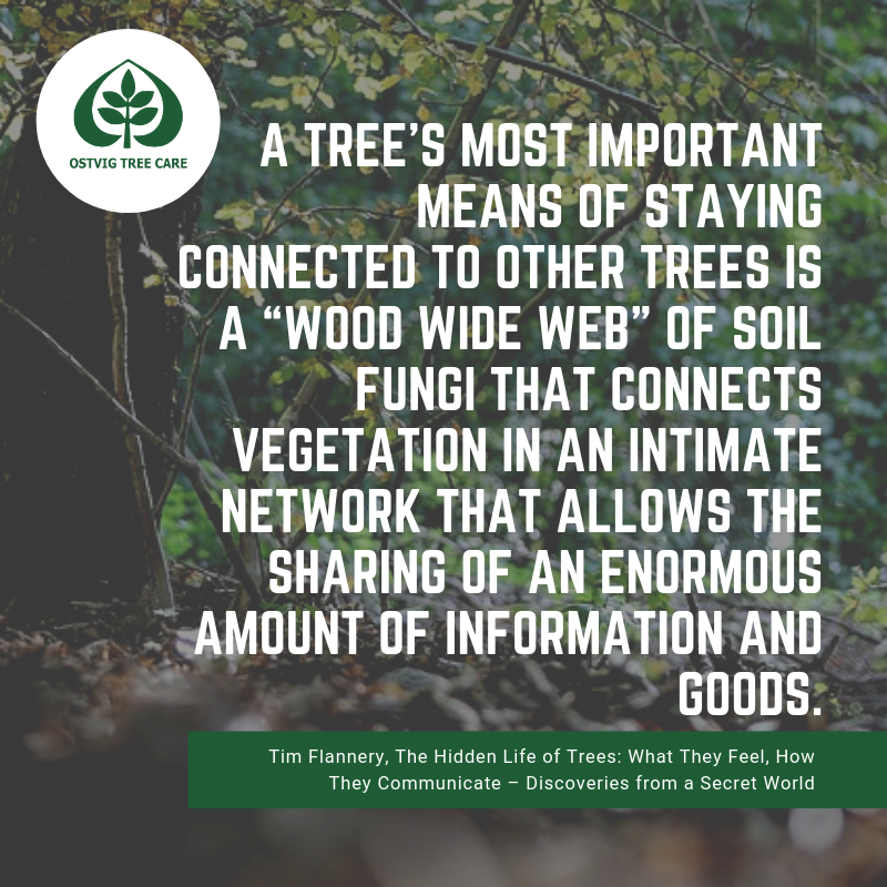 A tree's most important means of staying connected to other trees is a wood wide web of soil fungi that connects vegetation in an intimate network that allows the sharing of an enormous amount of information and goods