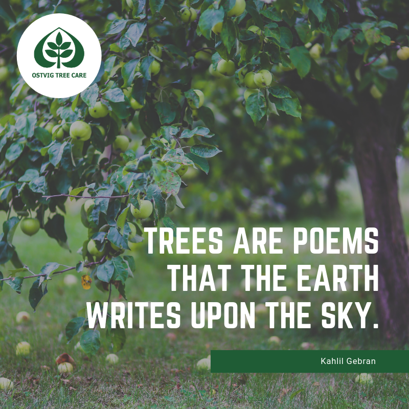Trees are poems that the earth writes upon the sky.
