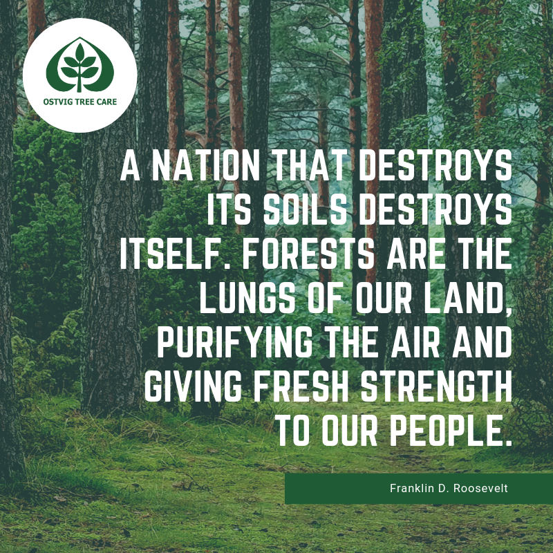 A nation that destroys its soils destroys itself. forests are the lungs of our land, purifying the air and giving fresh strength to our people.