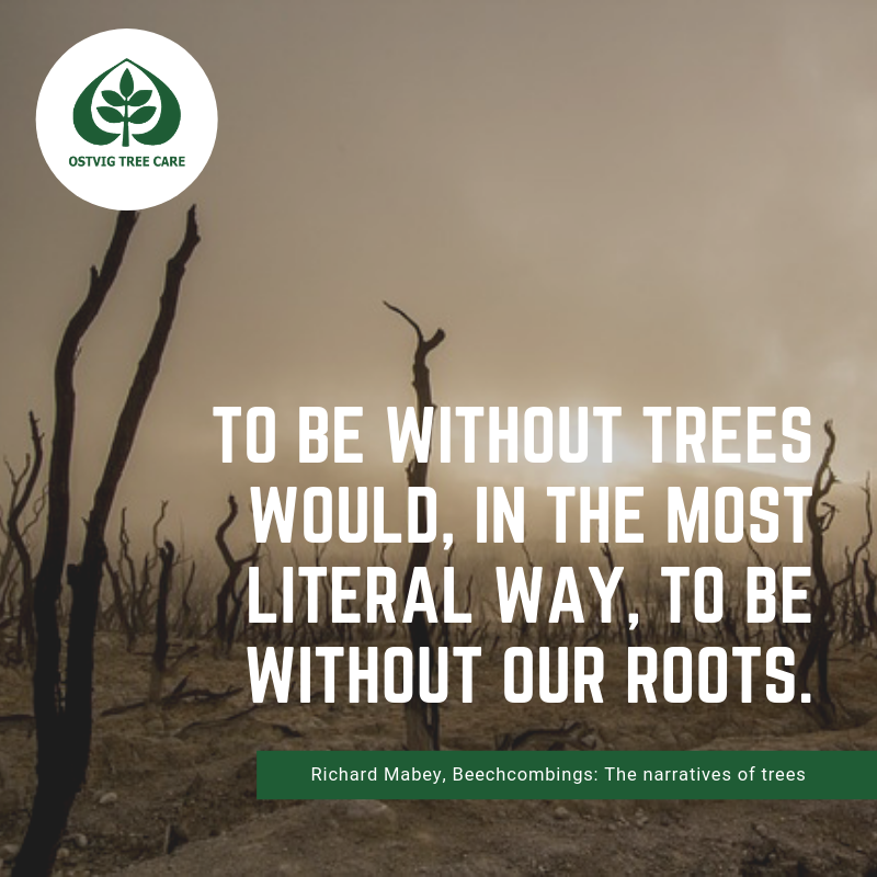To be without trees would, in the most literal way, to be without our roots.