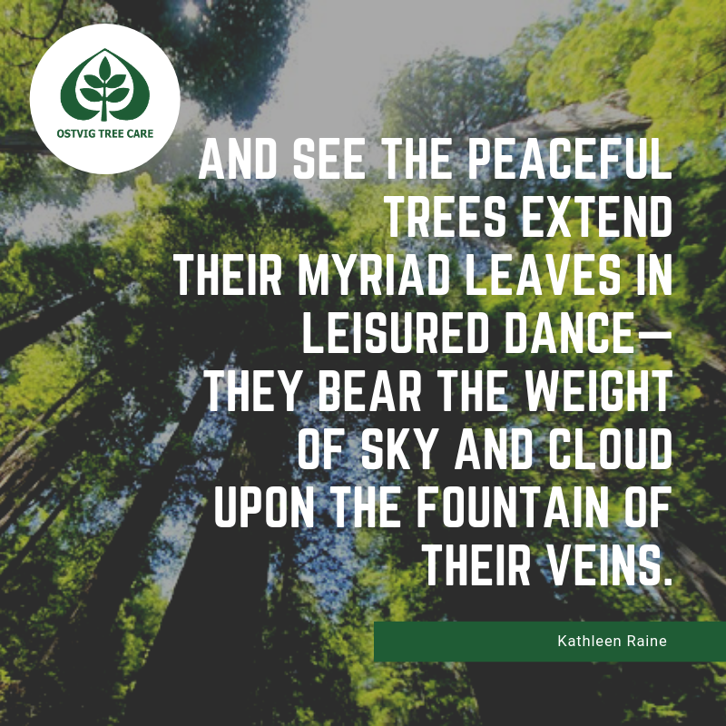 """And see the peaceful trees extend their myriad leaves in leisured dance— they bear the weight of sky and cloud upon the fountain of their veins."""