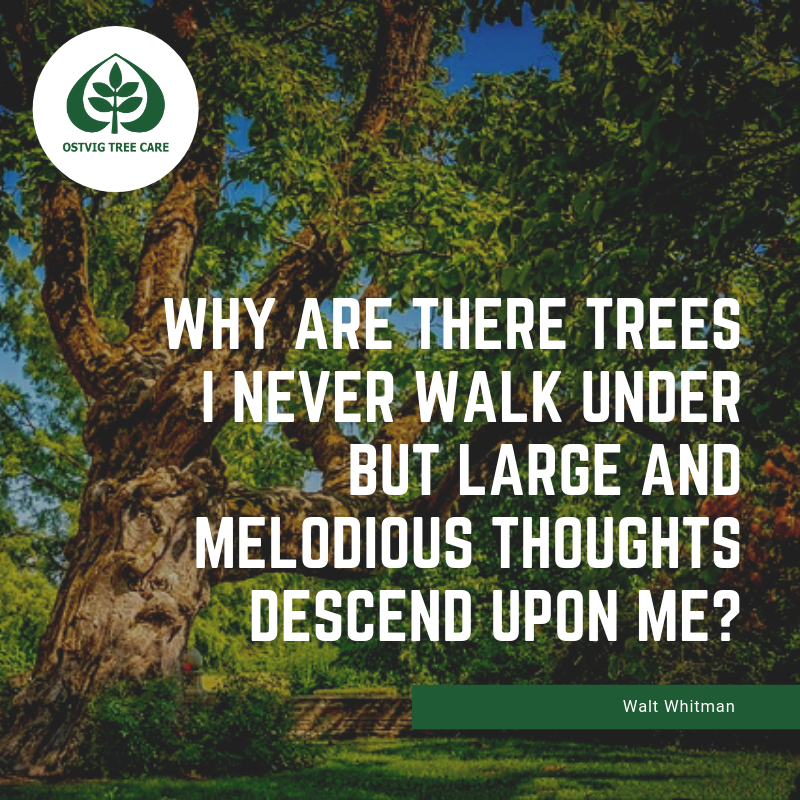 Why are there trees i never walk under but large and melodious thoughts descend upon me?