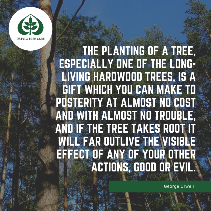 The planting of a tree, especially one of the long-living hardwood trees, is a gift which you can make to posterity at almost no cost and with almost no trouble, and if the tree takes root it will far outlive the visible effect of any of your other actions, good or evil.