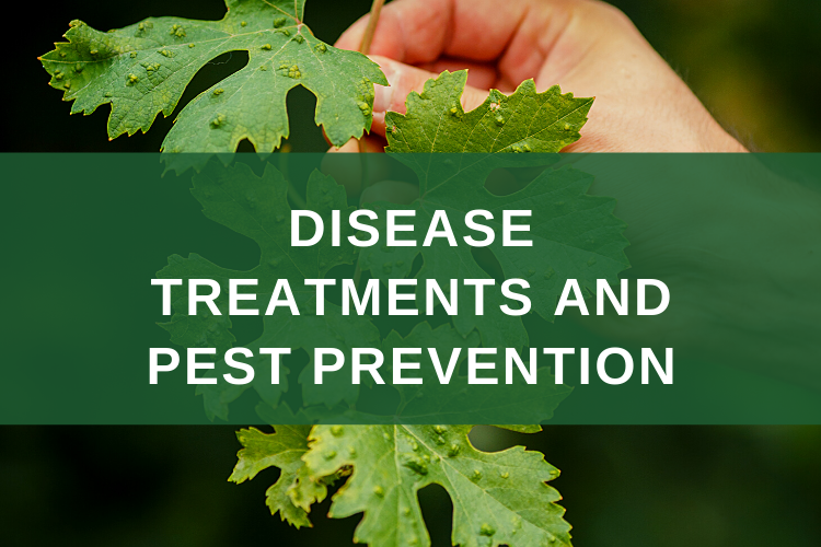 Disease Treatments and Pest Prevention Minnesota Ostvig Tree Care
