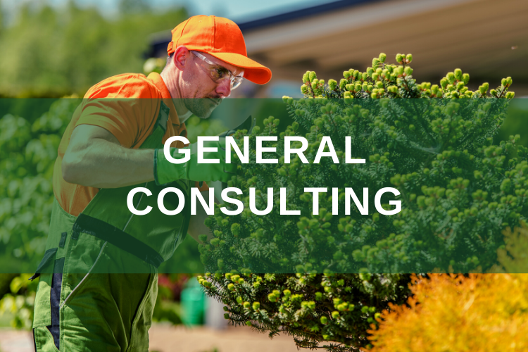 General Tree Care Consultation Ostvig Tree Minnesota