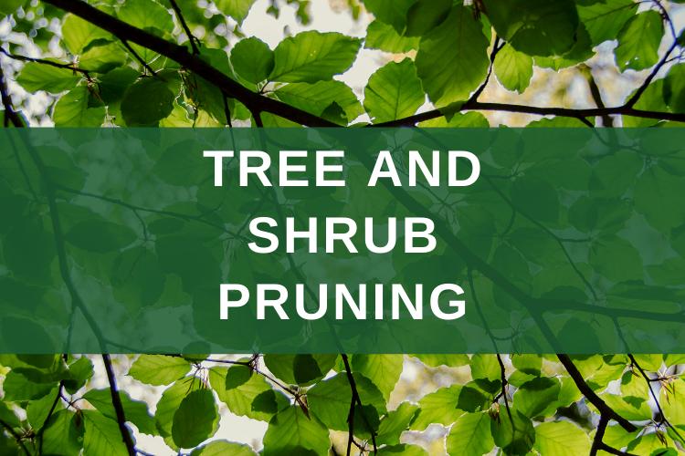 Tree and Shrub Pruning Ostvig Tree Minnesota