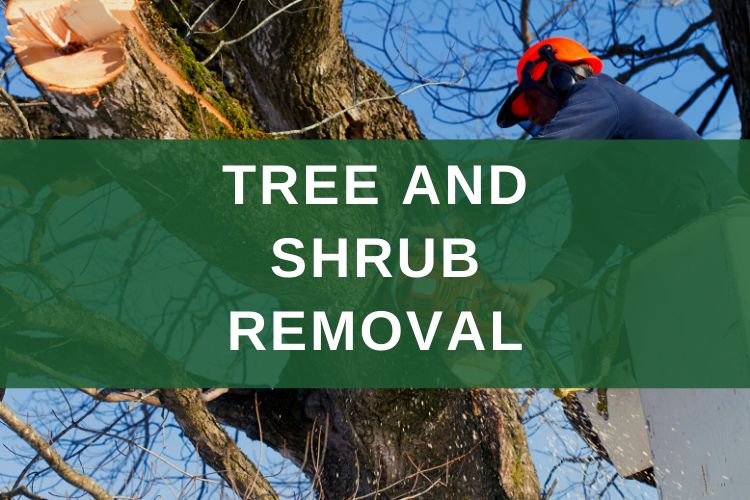 Tree and Shrub Removal