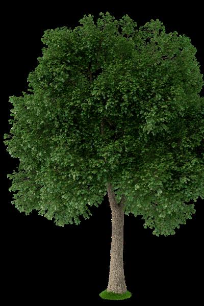ostvig tree